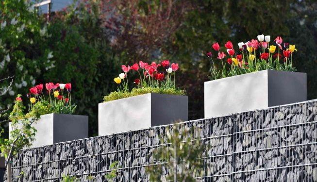 Tulpen im Blumenbeet / Blumentopf